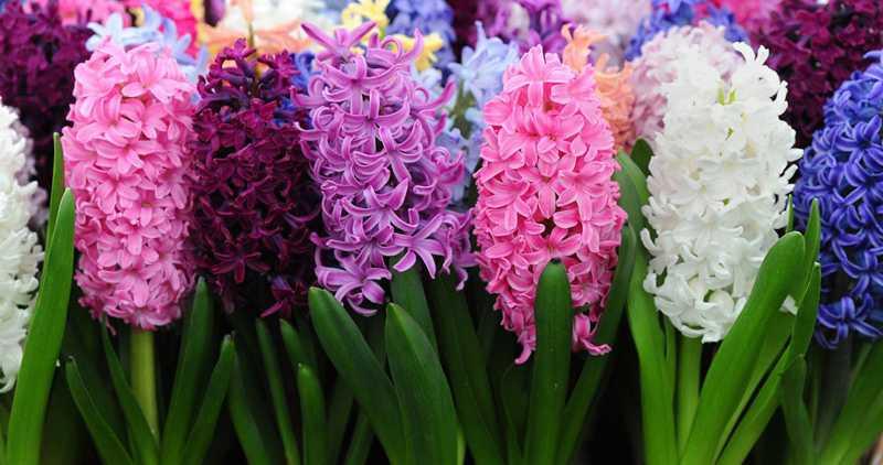 Самые красивые растения мира