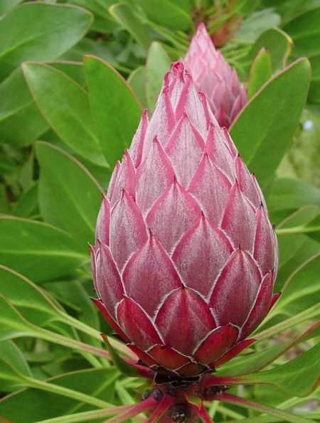 Самые красивые растения мира23
