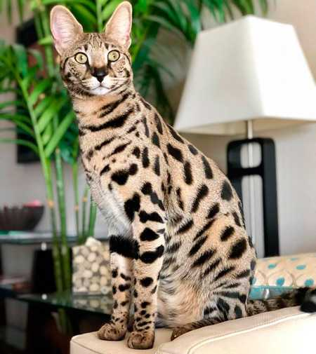 Самые дорогие коты в мире