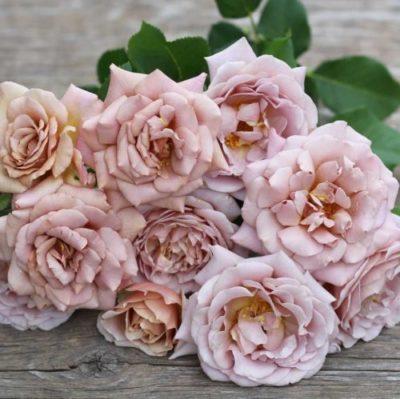 Полиантовая роза что это такое14
