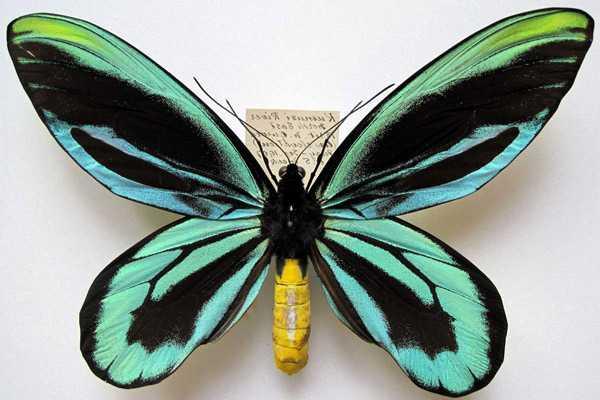 Какие бывают бабочки11
