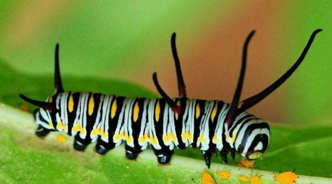 Какие бывают бабочки13