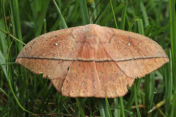 Какие бывают бабочки14