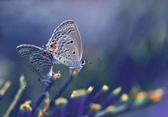 Какие бывают бабочки16-2