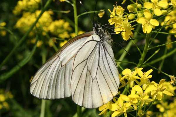 Какие бывают бабочки18