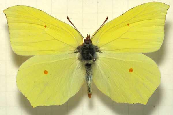 Какие бывают бабочки19