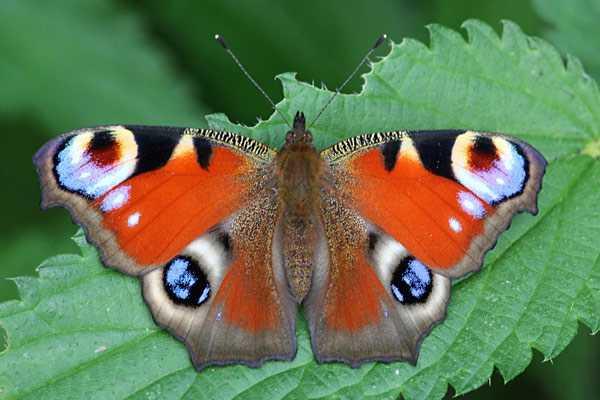 Какие бывают бабочки2