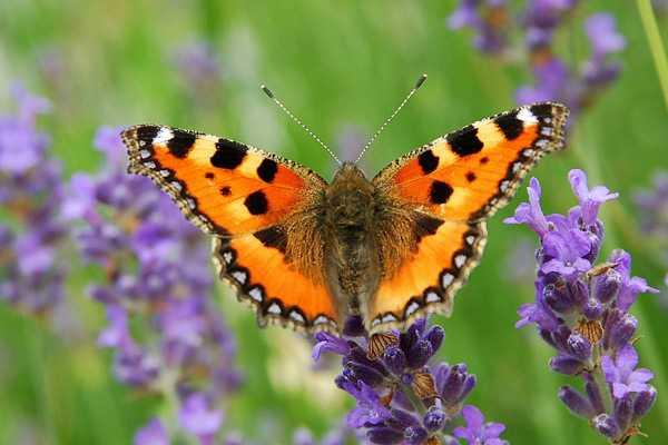 Какие бывают бабочки20
