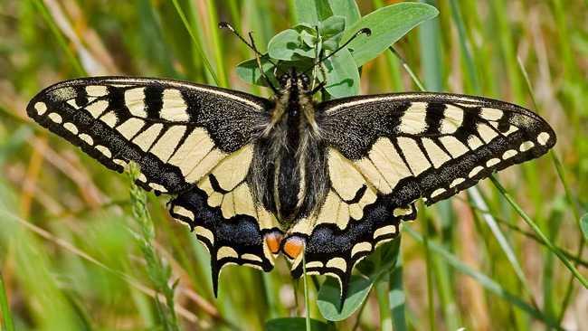 Какие бывают бабочки21