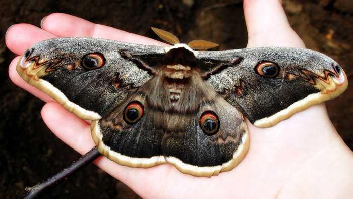 Какие бывают бабочки22