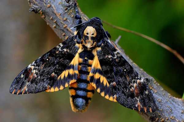 Какие бывают бабочки23