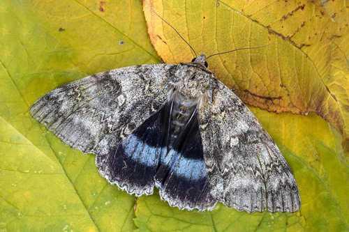 Какие бывают бабочки24