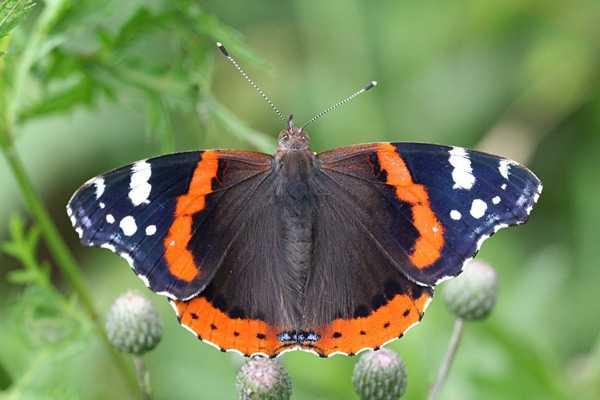 Какие бывают бабочки4