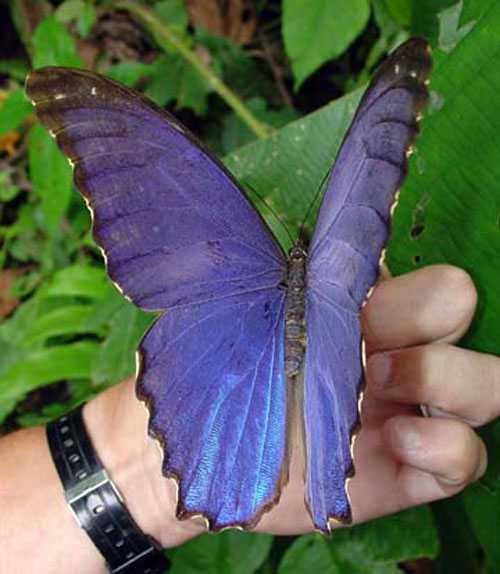 Какие бывают бабочки6