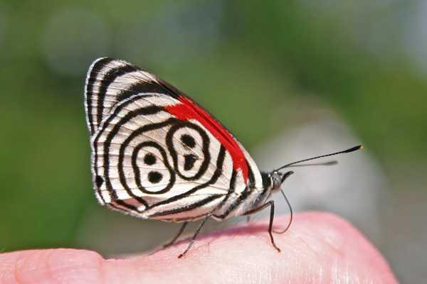 Какие бывают бабочки7