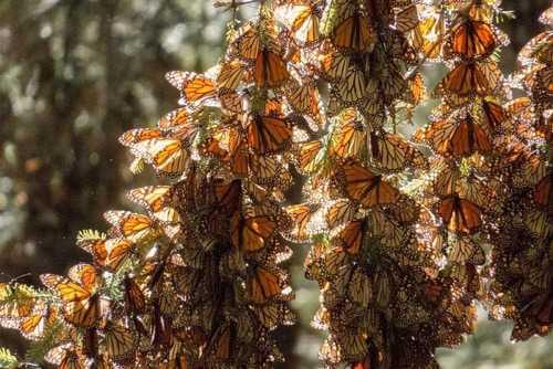 Какие бывают бабочки9