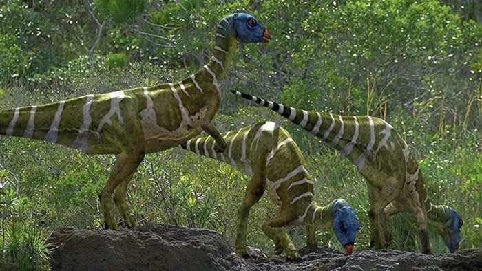 Какие бывают динозавры16