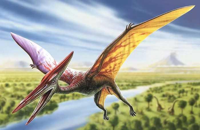 Какие бывают динозавры17