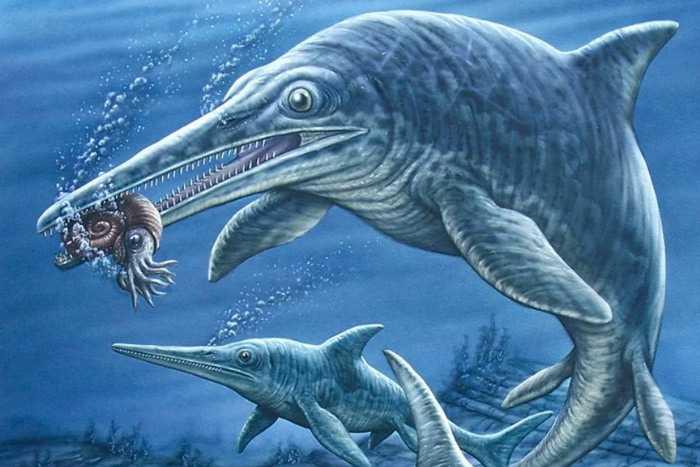 Какие бывают динозавры2