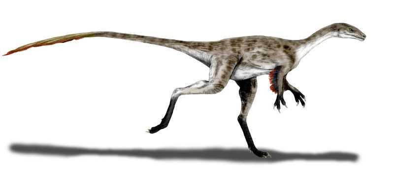 Какие бывают динозавры20