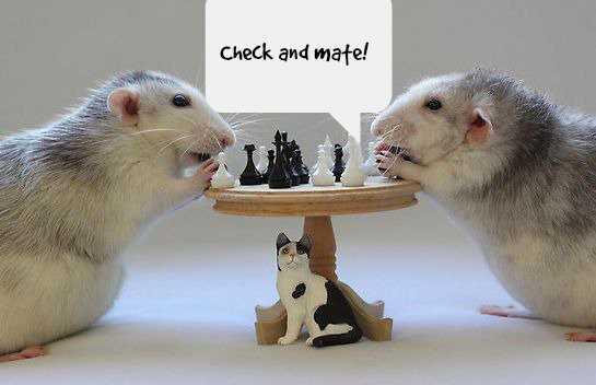 Какие самые умные животные в мире3