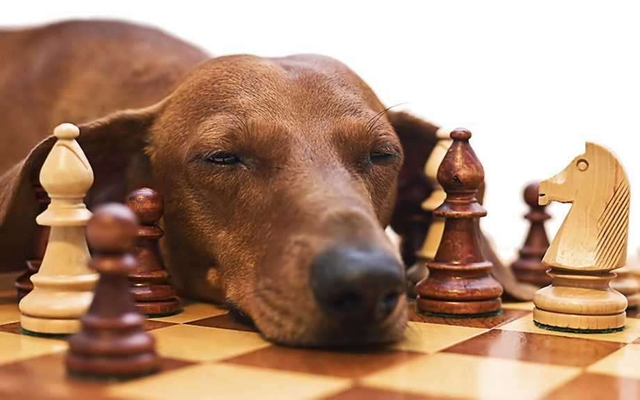 Какие самые умные животные в мире4