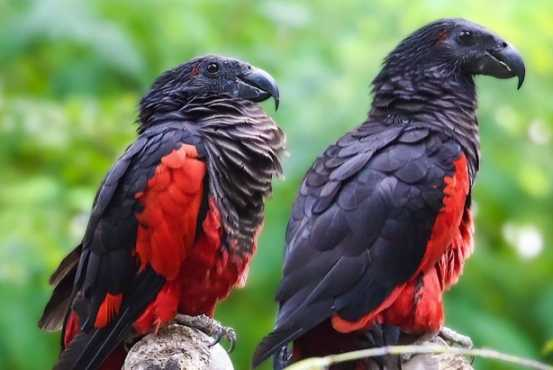 Самая красивая птица в мире10-2