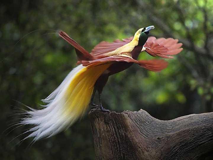 Самая красивая птица в мире12