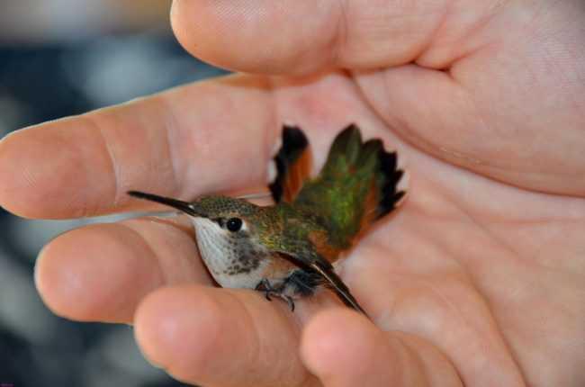 Самая красивая птица в мире13
