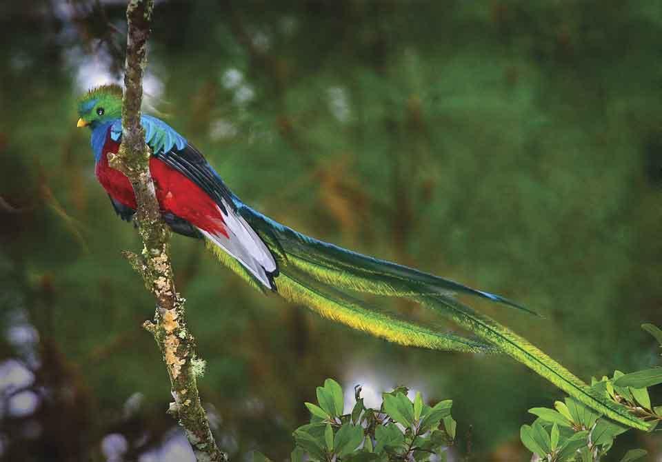 Самая красивая птица в мире14