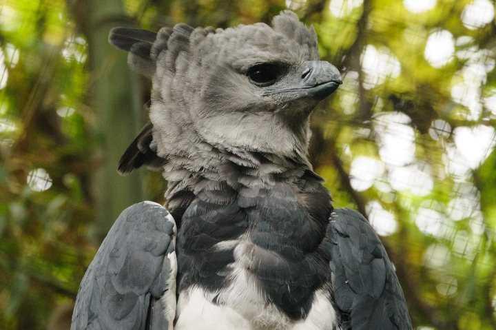 Самая красивая птица в мире15