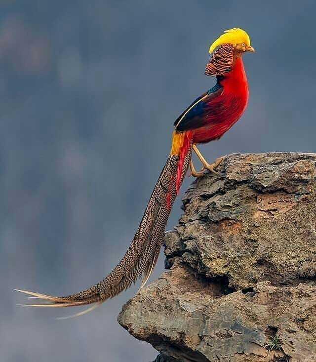 Самая красивая птица в мире7