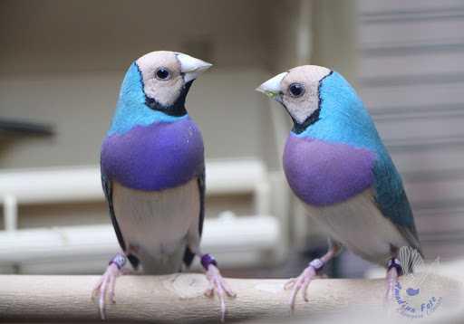 Самая красивая птица в мире8