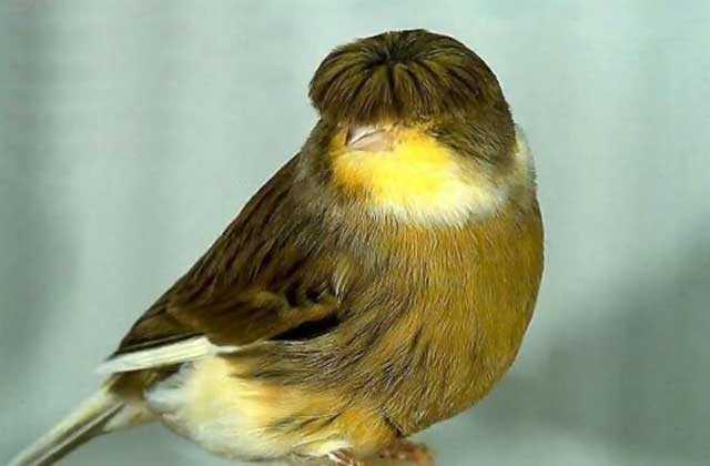 Самая красивая птица в мире9