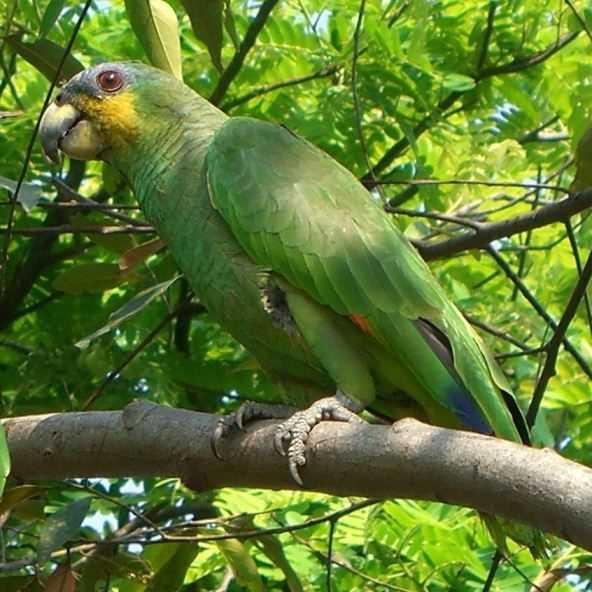 Самый умный попугай для дома 4