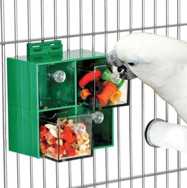 Самый умный попугай для дома 7
