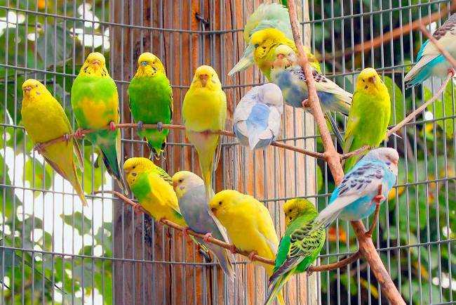 Самый умный попугай для дома 1