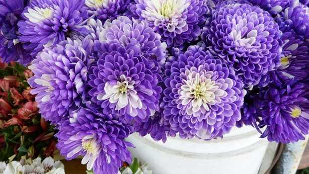 Какие бывают цветы для букетов-1