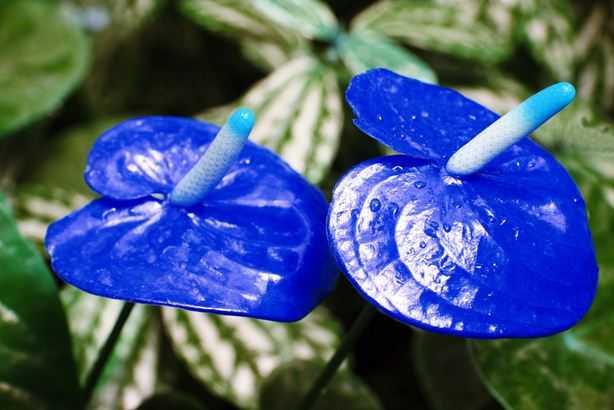 Какие бывают цветы для букетов-11