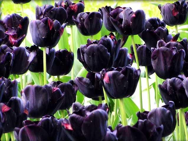 Какие бывают цветы для букетов-13