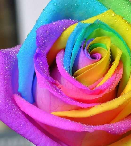 Какие бывают цветы для букетов-14