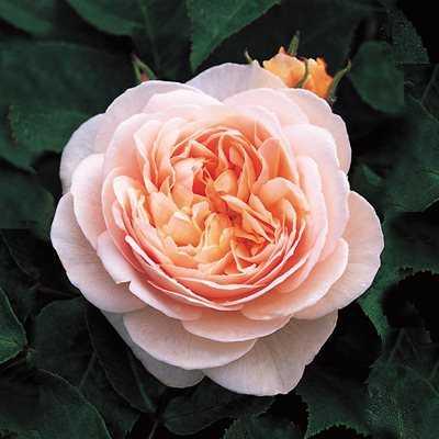 Какие бывают цветы для букетов-16