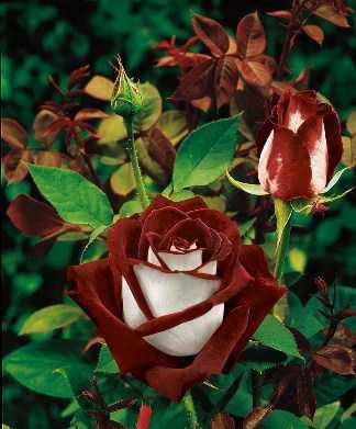 Какие бывают цветы для букетов-2