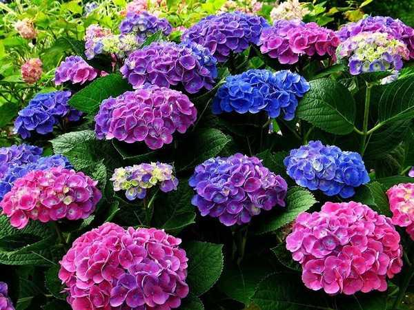 Какие бывают цветы для букетов-20
