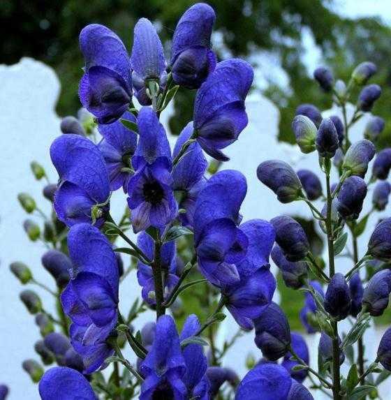Какие бывают цветы для букетов-22