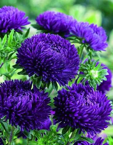 Какие бывают цветы для букетов-4