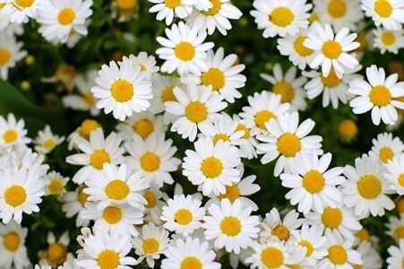 Какие бывают цветы для букетов-5