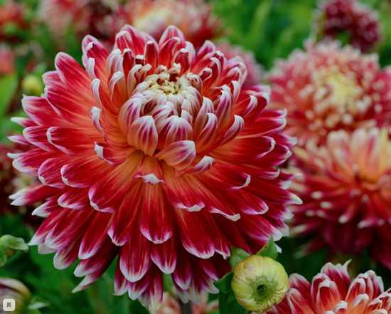 Какие бывают цветы для букетов-7