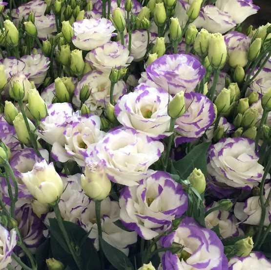 Какие бывают цветы для букетов-8