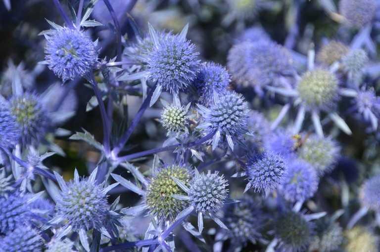 Какие бывают цветы для букетов-9